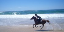 Aliya - Beach Horse Riding Holiday Port Macquarie NSW - Southern Cross Horse Treks Australia