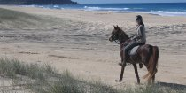 Australian Horse Trekking Holidays Port Macquarie Beaches NSW