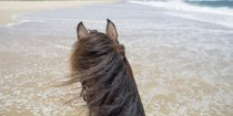 Beach Horse Riding Holidays Australia NSW- Southern Cross Horse Treks