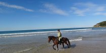 Kuta - Horse Riding Trek Beaches NSW - Horse Tours Australia