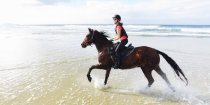 Andalusian Horse Australian Beach Holiday