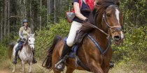 Gallop Through Kerewong State Forest Australian Horse Riding Holidays