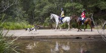 Horse Riding Kerewong State Forest NSW Australia