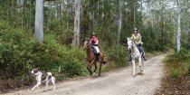 Horse Riding Holidays Bush Treks Australia NSW North Coast