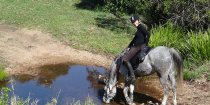 Jimmy Drinks At Creek, Kerewong Horse Riding Holiday Tours, Port Macquarie NSW Australia