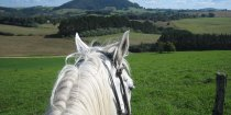 Horse Riding Treks, Port Macquarie Hinterland Comboyne NSW Australia