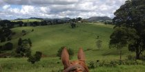 Horse Treks To Comboyne Plateau, Port Macquarie Hinterland NSW Australia