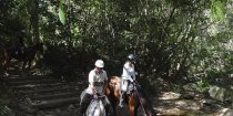 Horse Riding Tours Creek Crossing Southern Cross Horse Treks Australia NSW North Coast