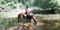 Creek Horse Riding NSW Australia  Horse Treks Mid North Coast Near Port Macquarie