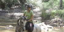 Arabian Horses Trekking Tours NSW Mid North Coast North Of Sydney Australia