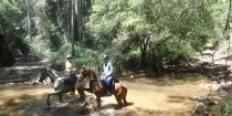 Horse Riding Adventure Tours Horse Treks Australia NSW North Coast