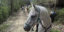 Well Trained Endurance Horses Port Macquarie Hinterland Adventure Tours NSW