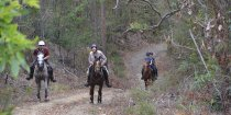 Comboyne Mountain, Horse Treks Australia NSW Adventure Tours