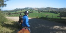 Horse Riding Tours On Comboyne Plateau NSW Australia