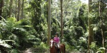 Australian Horse Riding Holiday Tours Bush Trail Rides NSW Australia