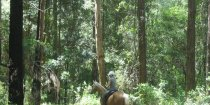 Horse Riding Tours Remote Bush Trails Mid North Coast NSW Australia