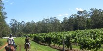 Horse Riders Arrival At Winery Port Macquarie Hinterland NSW Australia