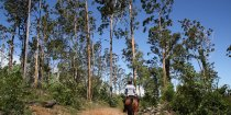 Port Macquarie Hinterland Horse Riding Tours NSW Australia