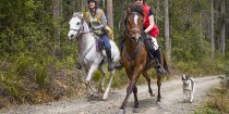 Horse Riding Treks Gallop Through Australian NSW North Coast Forest Horseriding Tour