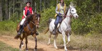 Trotting Through Australian State Forests Horseriding NSW