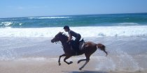 Aliya - Beach Horse Riding Australia NSW - Southern Cross Horse Treks