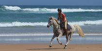 Manni - Beach Horse Riding Port Macquarie NSW - Horse Treks Australia