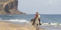 Jimmy - Beach Horse Riding NSW Mid North Coast - Southern Cross Horse Treks Australia