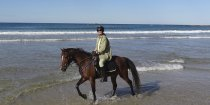 Kuta - Horse Riding Port Macquarie Beaches NSW - Horse Treks Australia