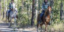 Arabian Endurance Horses NSW Australia