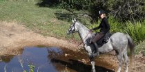 Jimmy - Horse Riding Holidays Port Macquarie Hinterland NSW Australia