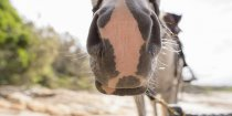Australian Horse Riding Holiday Photos - Jimmy Close-up