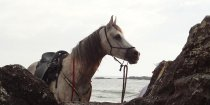 Jimmy - Horse Riding Adventures Holidays East Coast Beaches NSW Australia