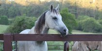 Jimmy - Horse Treks Australia Horse Riding Holidays Farmstay NSW