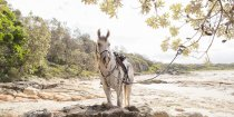Jimmy - Australian Adventure Horse Riding Holidays Port Macquarie Beaches NSW