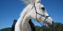 Kiya - Southern Cross Horse Treks Holidays NSW - Horse Beach Riding Near Port Macquarie