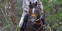 Kuta - Horse Treks Australia Endurance Horse Riding NSW