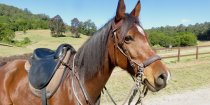 Australian Horse Riding Tours NSW Holidays