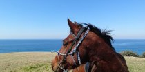Nadal - Endurance Horse Riding Adventure Holiday NSW Australia