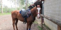 Aliya Saddled Ready For Horse Riding Holiday Australia