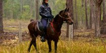 Horse Endurance Riding Tours NSW Australia