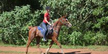 Aliya - Australian Arabian Horse Riding Holidays Port Macquarie Hinterland NSW