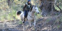 Endurance Horse Riding Adventures - Southern Cross Horse Treks Australia
