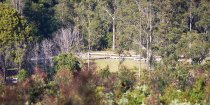 Swans Crossing Campground Kerewong State Forest NSW Australia