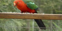 King Parrot Farm Holiday Birdlife NSW Australia