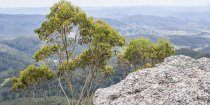 Mountain Top Views Horseback Riding Holiday Australia