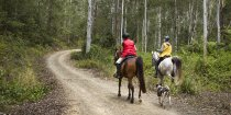 Horse Riding Australian Bush Trail NSW State Forests Australia