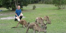 Australian Wildlife - Meeting Kangaroos During Horse Beach Ride On NSW Mid North Coast
