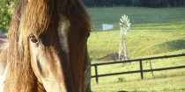 NSW Mid North Coast Horse Riding Holiday Trekking Port Macquarie Hinterland Region Australia
