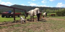 Horse Care Job Australian Working Holiday