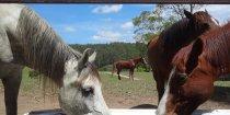 Horse Treks Australia Horseriding Holidays NSW Mid North Coast